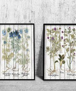 dwa plakaty z ziołami