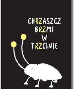 plakaty z chrząszczem