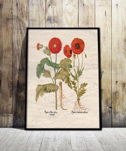 plakaty z ziołąmi