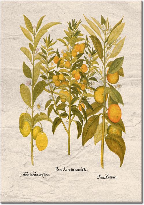 plakaty z cytrynami