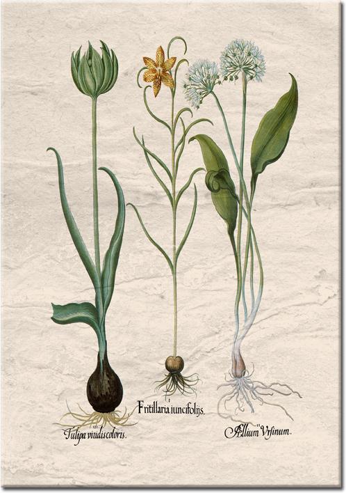 plakaty zkwiatami