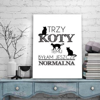 plakaty koty