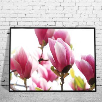 Plakaty kwiaty i rośliny