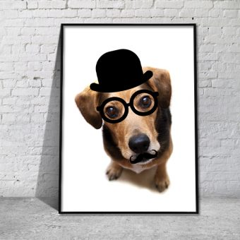 Plakaty psy