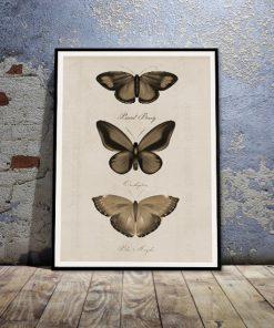 plakaty z motylami