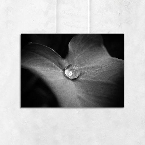 Plakat z motywem liścia do sypialni