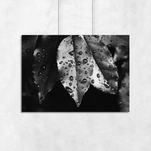 Czarno-biały plakat z liśćmi