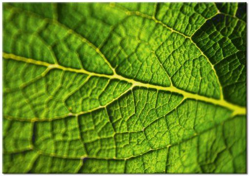 Plakat z zielonym liściem do ozdoby salonu