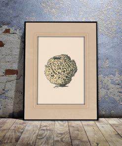 rafa koralowa jako motyw plakatu