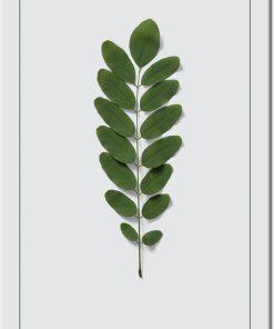 zielone liście na plakacie jako gałązka