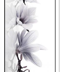 białe kwiaty na plakacie