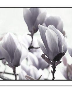 poziome plakaty z magnolią