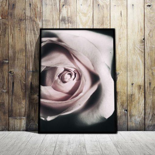 ciemne tło plakatu z motywem róży