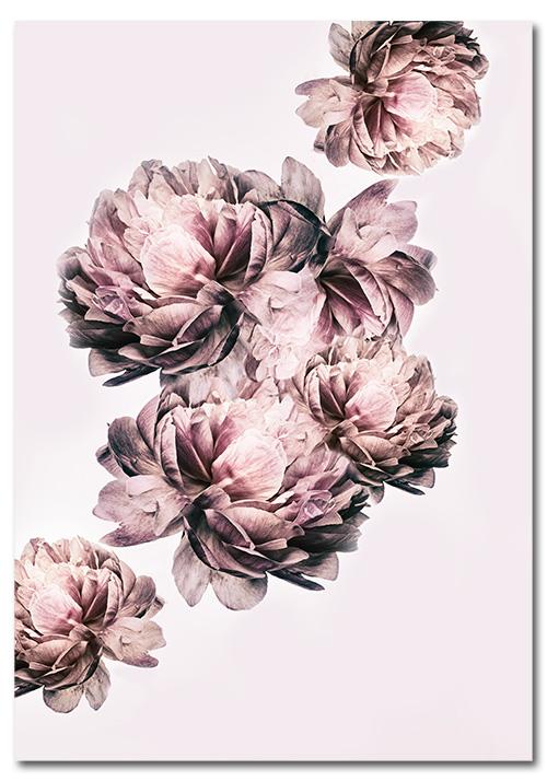 różowe kwiaty jako plakat