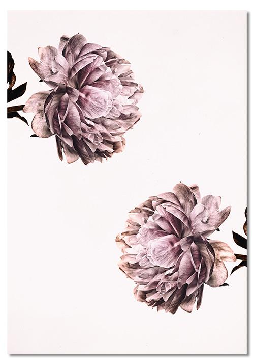 różowy plakat do salonu