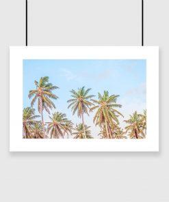 Plakat z motywem palm