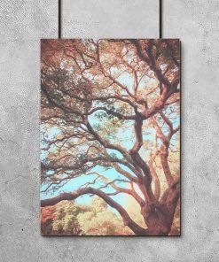 kolorowe drzewo jako plakat