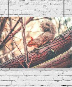 plakat kolorowy z wiewiórą