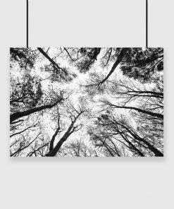 plakat z wysokimi drzewamii