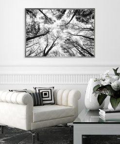 plakat przedstawiający las