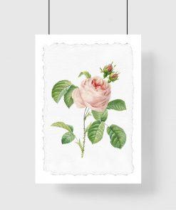 plakat różowy kwiat