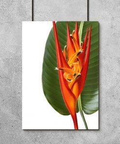 motyw pomarańczowego kwiatka