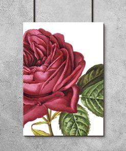 motyw róży jako plakat
