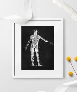 Plakat anatomiczny - Widok z tyłu