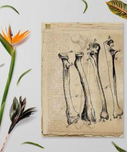 Plakat - Kości dla fizjoterapeutów