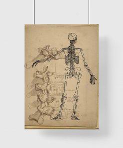 Plakat ze szkieletem dla fizjoterapeuty