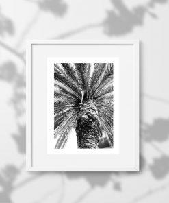 Plakat z palmą do biura