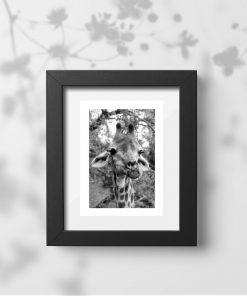 Plakat zwierzęta Afryki - sawanna