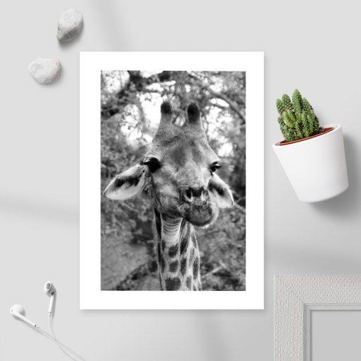 Plakat z motywem żyrafy do oprawienia