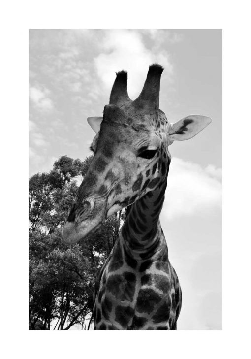 Plakat afrykańska fauna