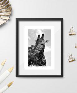 Plakat do ozdoby szkolnej sali z żyrafą