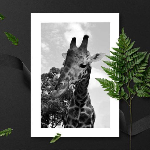 Plakat z afrykańskimi zwierzętami
