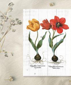 Plakat z tulipanami do pokoju