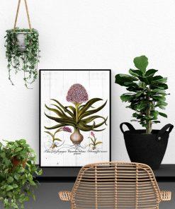 Hiacynt na deskach - Plakat botaniczny do biura