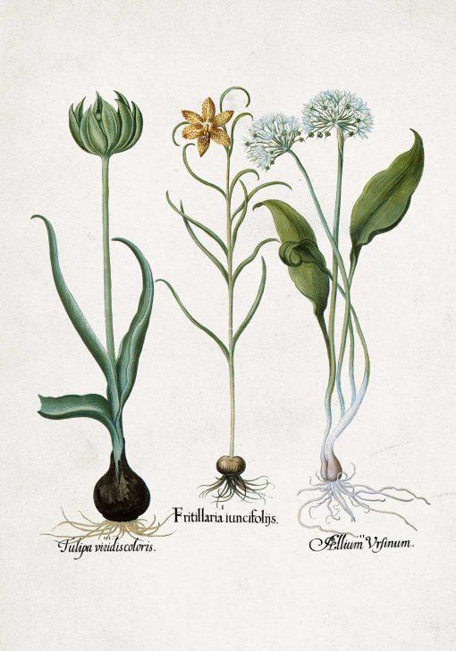 Botaniczny plakat z motywem kwiatów polskich do jadalni