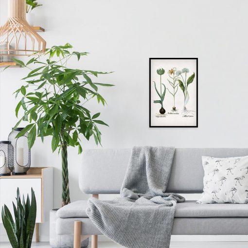 Botaniczny plakat z motywem kwiatów polskich do salonu