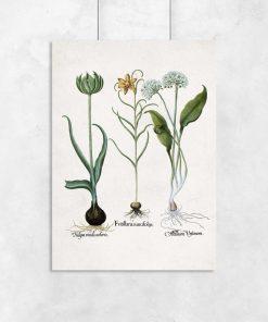 Botaniczny plakat z motywem kwiatów polskich na przedpokój