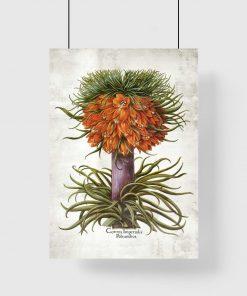 Cesarska korona - Plakat botaniczny do biura
