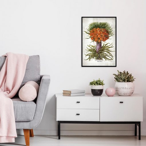 Cesarska korona - Plakat botaniczny do kuchni