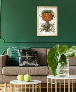 Cesarska korona - Plakat botaniczny do salonu