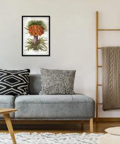 Cesarska korona - Plakat botaniczny do sypialni