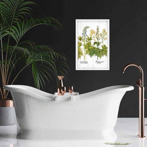 Edukacyjny plakat z kwiatami jasnoty białej do łazienki
