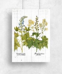 Edukacyjny plakat z kwiatami jasnoty białej do przedpokoju