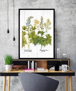 Edukacyjny plakat z kwiatami jasnoty białej do salonu