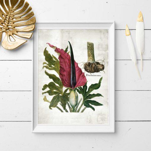 Edukacyjny plakat z motywem roślin