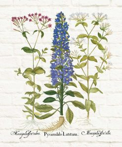 Edukacyjny plakat z polnymi kwiatami do jadalni